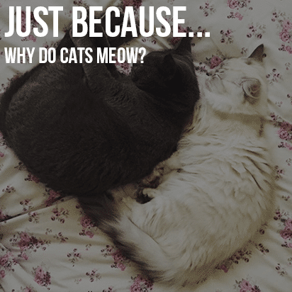 Just Because…Cats Meow