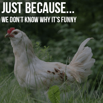 Just Because…We Don't Know Why We Laughed